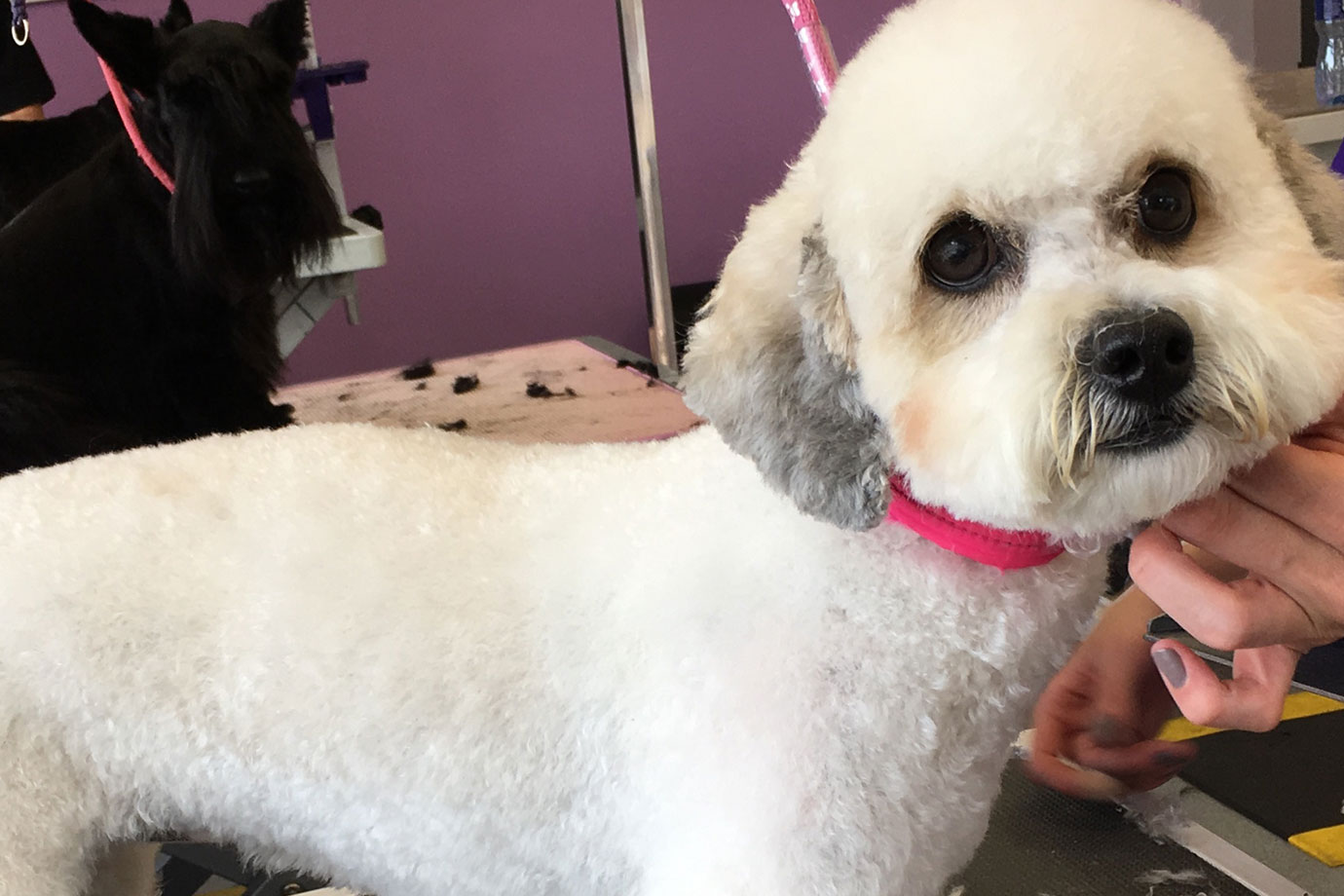 Full Dog Grooming in Southwell, Nottinghamshire